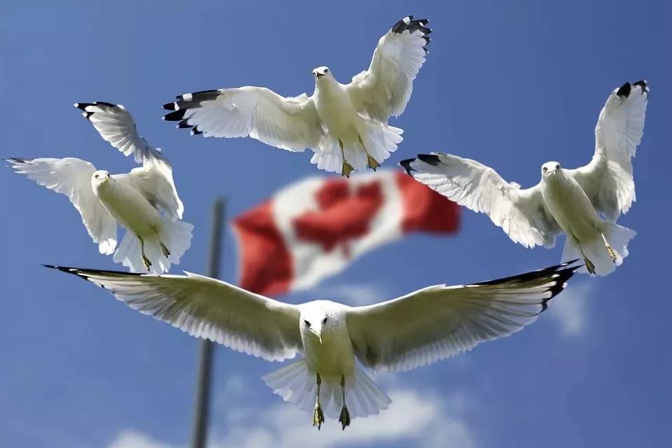 不同国家的人是如何评价移民加拿大后的生活的?涵盖工作基等支、教育基等支、福利等方面